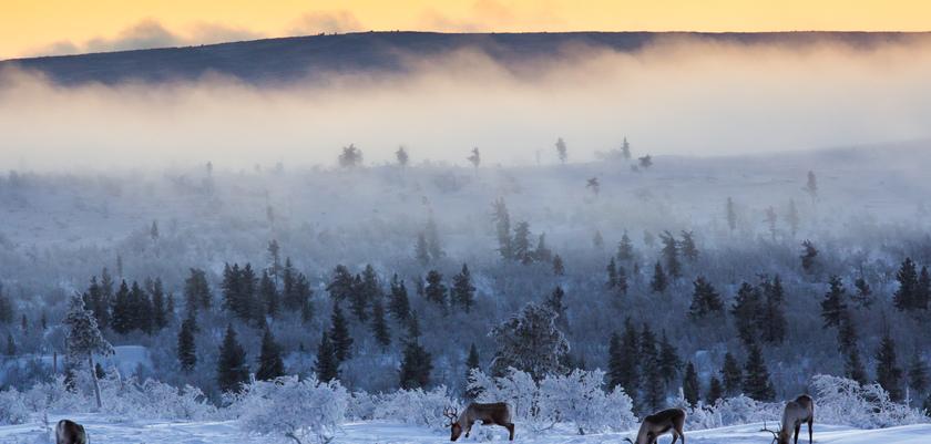 finland_lapland_saariselka_reindeer-farm.jpg
